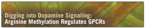 PRMT5_C_elegans_GPCRs