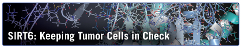 SIRT6: Keeping Tumor Cells in Check