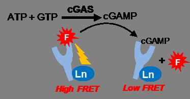 cGAS Assay Schematic TR-FRET Readout