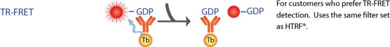 TR-FRET GDP GAP Assay