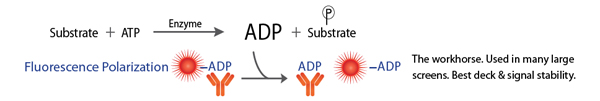 Kinase Assay ADP FP