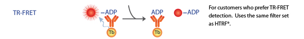 Kinase Assay ADP TR-FRET