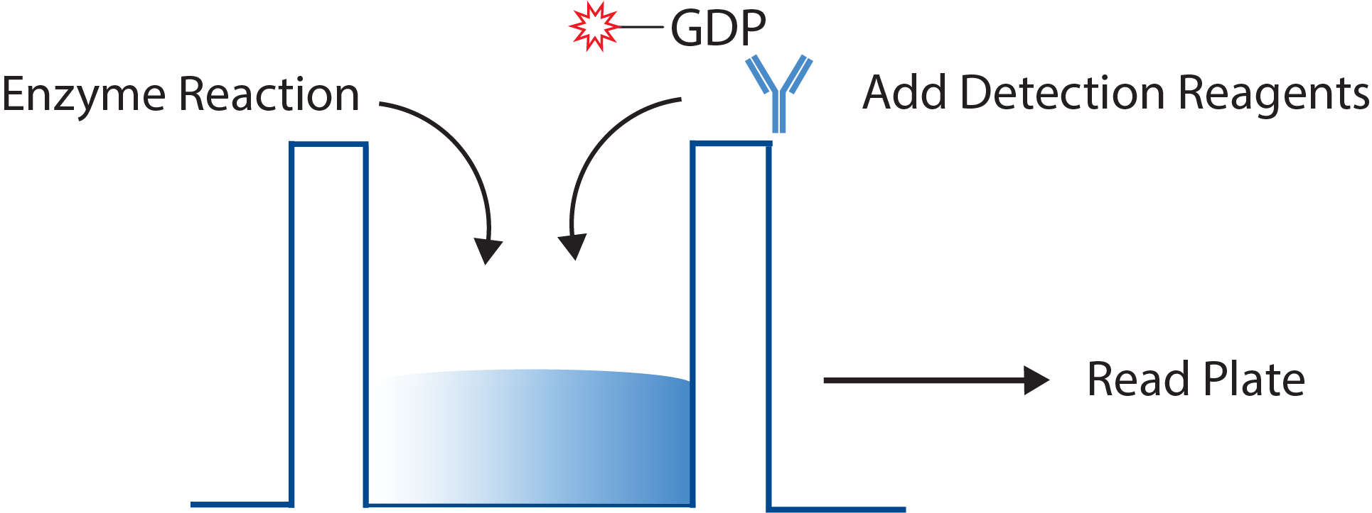 GDP GTPase Assay Schematic
