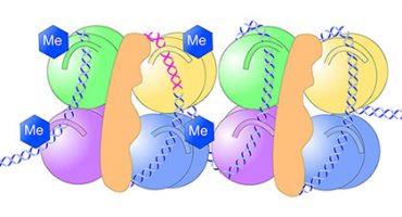 Histone Methylation PRMT4