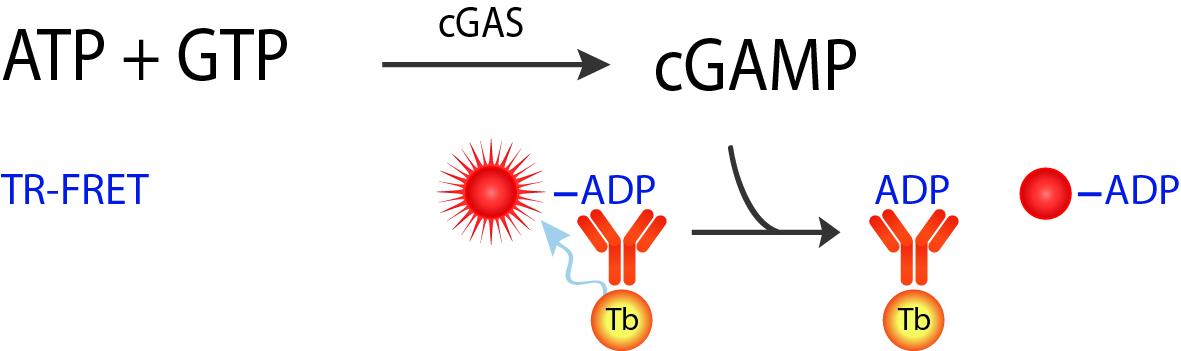 cGAMP Assay TR-FRET Schematic