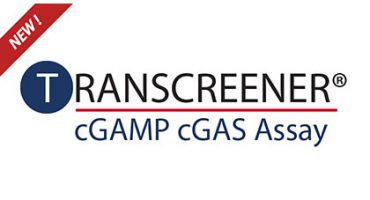 New Transcreener cGAS Assay