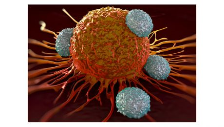 Cancer Cell T Cell CD39 Activity Assay