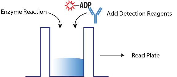 ADP Biochemical Assay Steps