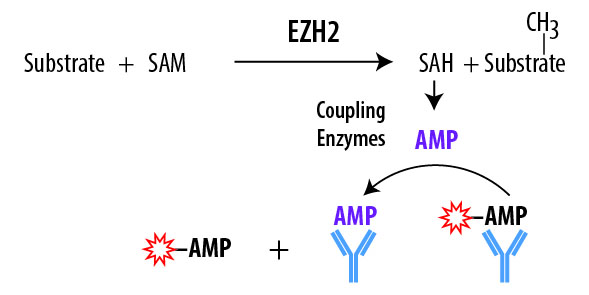 EPIGEN EZH2 Assay Schematic