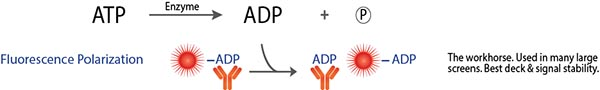 FP ADP ATPase Assay