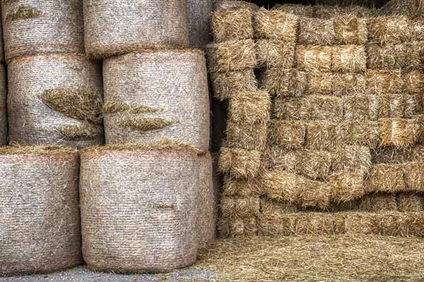 High Throughput Screening Assays Make it Easier to Find the Needle in the Haystack
