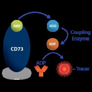Transcreener CD73 Assay Product Image