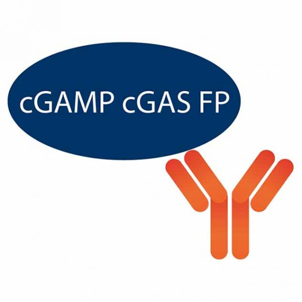 cGAMP cGAS FP Assay Graphic