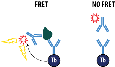 Sandwich TR-FRET Assay
