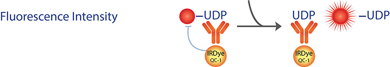 Transcreener UDP Glycosyltransferase Assay FI Readout