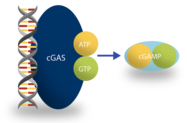 Recombinant cGAS Enzyme