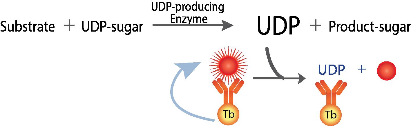 UDP TR-FRET Website Figure 1-15 final