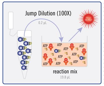 Jump Dilution