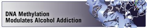 DNA Methylation Modulates Alcohol Addiction
